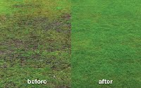 Lawn treatment before & After
