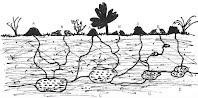 Harvester termite layout nest
