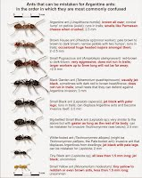 Ants of Southern Africa